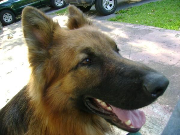 an image of dog dog_1466199949734.jpg